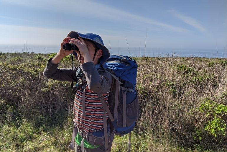 Looking for Tule Elks